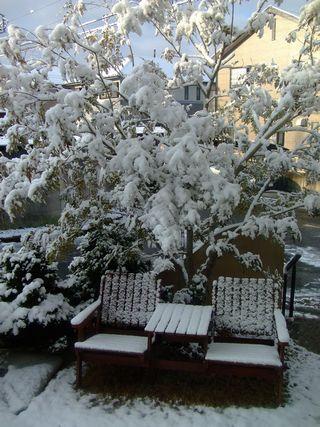 雪ふった日