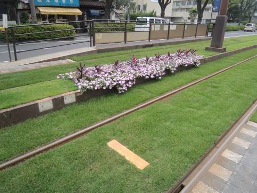 鹿児島便り_20130603_01_市電緑化敷10