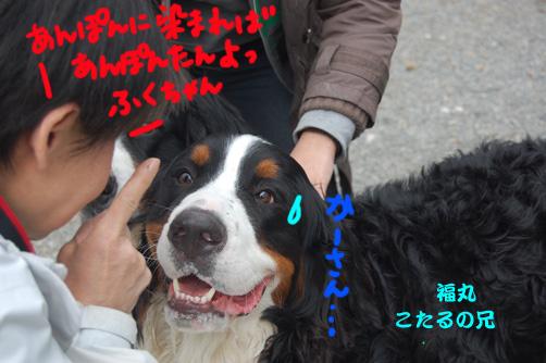 fukumaru1.jpg