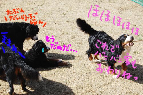 kuma5.jpg