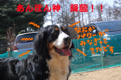 kuma55_20100417233323.jpg