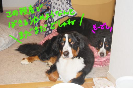 shizumare.jpg