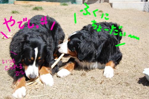 yadeshi.jpg