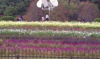お花のじゅうたん♪