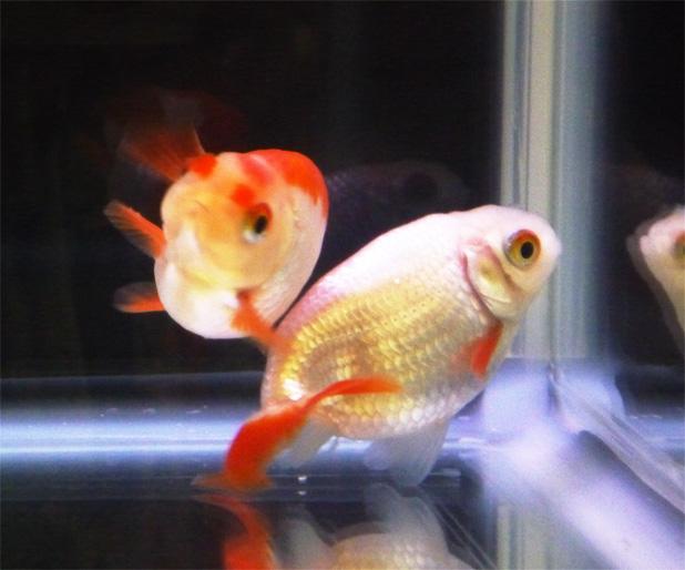 観賞魚フェア5