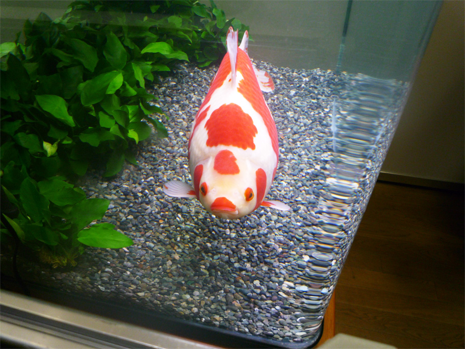 観賞魚フェア2