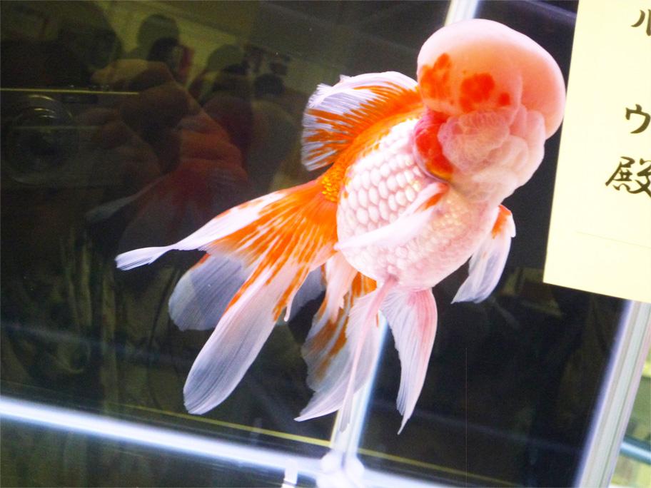 観賞魚フェア6