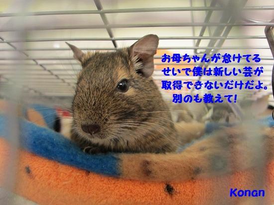 003_20101130160500.jpg