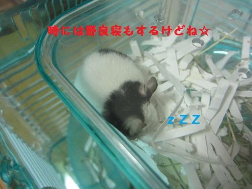 011_20100904120842.jpg
