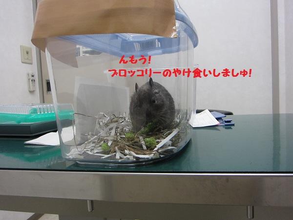 013_20101210153424.jpg