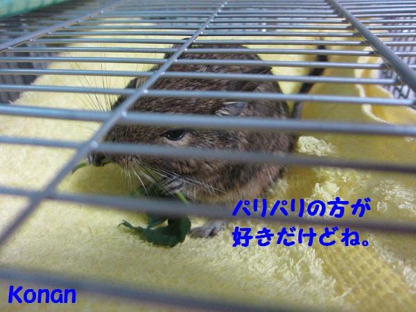 018_20100727135730.jpg