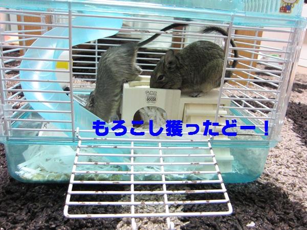 022_20100606095505.jpg