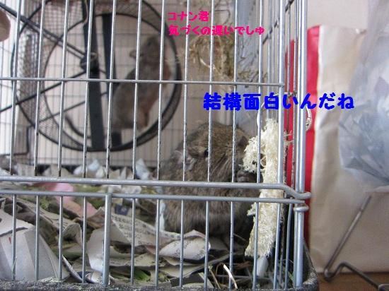 024_20110301235745.jpg
