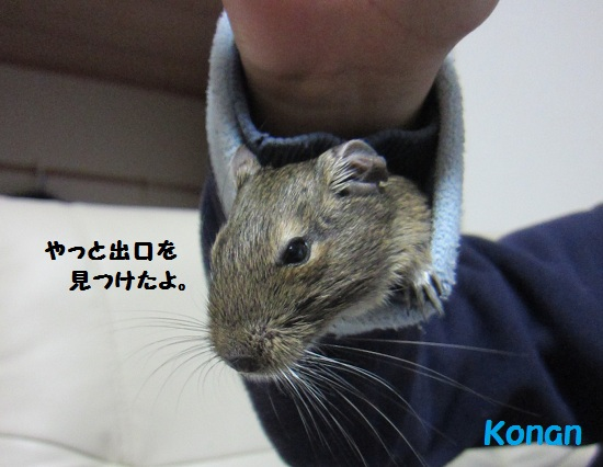 028_20110213112519.jpg