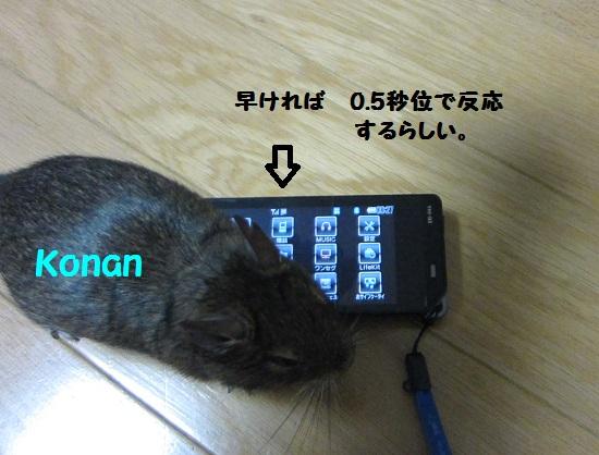 033_20101222172813.jpg