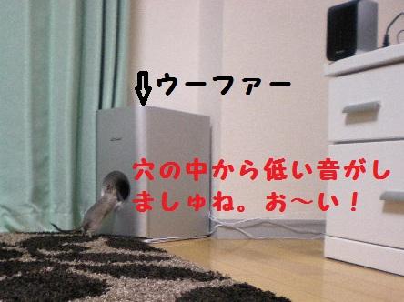039_20100526124746.jpg