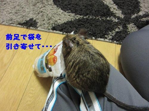 040_20101019135401.jpg