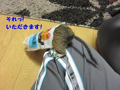 041_20101019135401.jpg