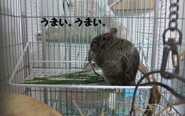 042_20100614110911.jpg