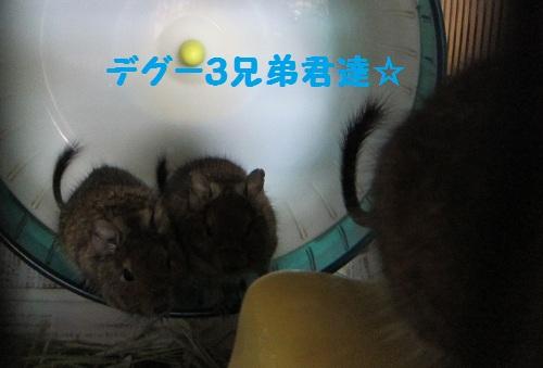 051_20101219211305.jpg