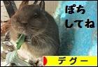 にほんブログ村 小動物ブログ デグーへ