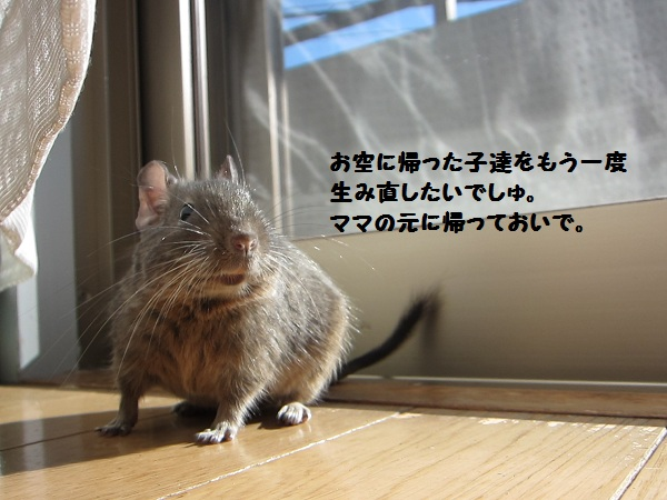 074_20110226004634.jpg