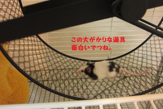 094_20101122154318.jpg