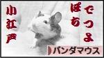 にほんブログ村 小動物ブログ パンダマウスへ