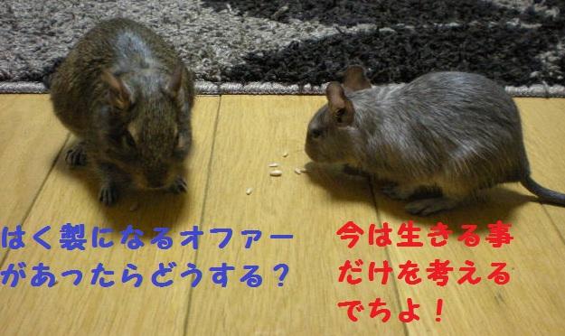292_20100523112352.jpg
