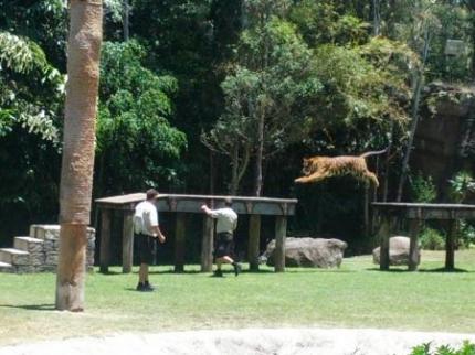 タイガーショー3