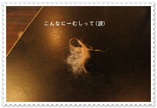 DSC00872.jpg