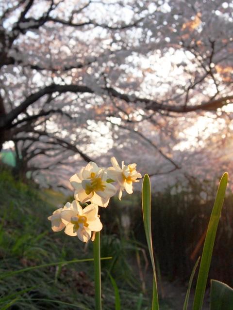 元荒川03
