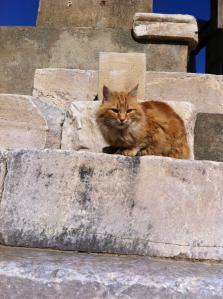 エフェソス猫