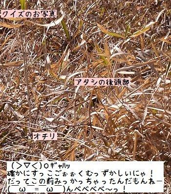 130316_7836b.jpg