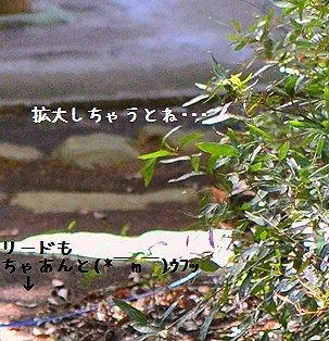 130427_9402a1.jpg