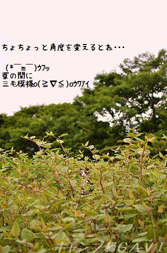 130602_1452.jpg