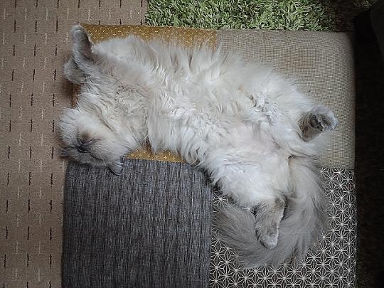 キリコの寝姿