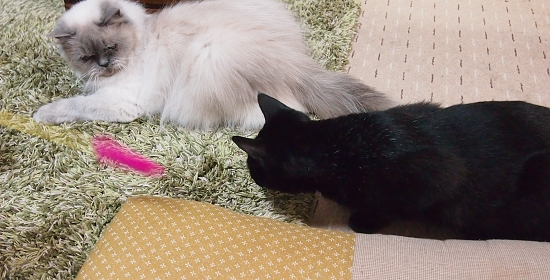 じゃらける愛猫 2013-3-30