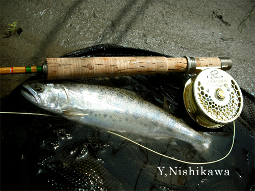 nishikawayamame1.jpg