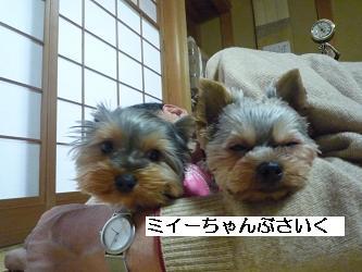 2010_0102 デジカメ写真20039