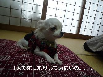2010_0102 デジカメ写真20037