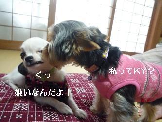 2010_0102 デジカメ写真20035