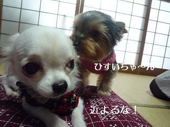 2010_0102 デジカメ写真20036