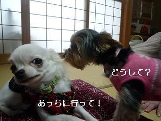 2010_0102 デジカメ写真20032