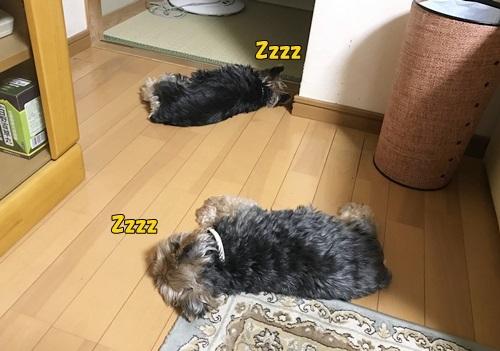 Zzzz.jpg