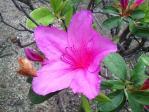 flower220110505.jpg