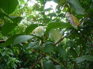 鍾乳洞側の植物