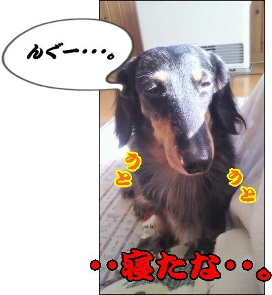 moblog_a69a4839[1]