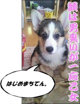 moblog_bb95a243[1]