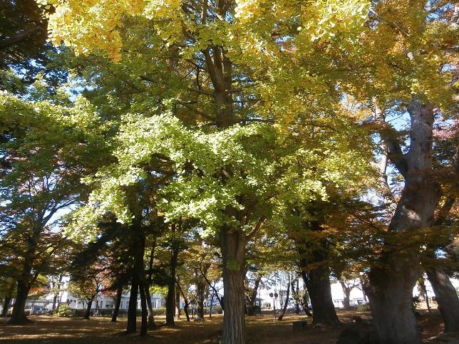 公園の秋(前)